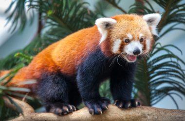"""Firefox 20 Update verschluckt """"Enter"""" Taste"""
